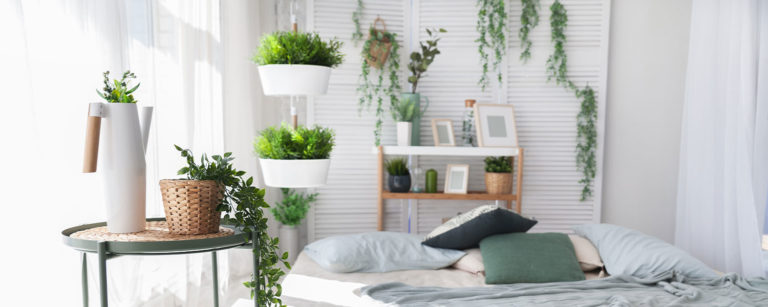 How to choose the Living room plant